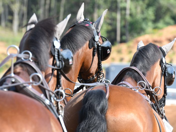 Team Horses Boyd Exell AUS