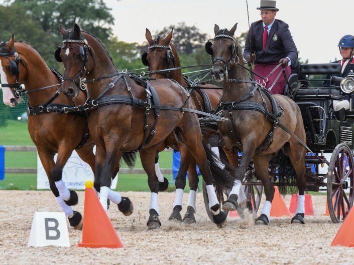 Dag 4 Cones Malmö City Horsedriving 2019