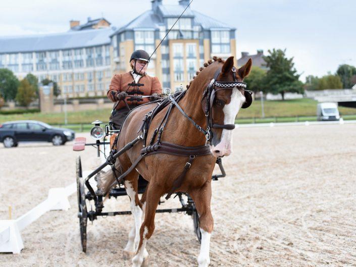 DAG.1 MALMÖ CITY HORSEDRIVING Dressage