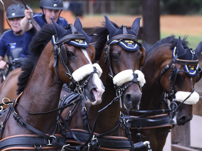 Four-in-Hand Driving TEAM SWEDEN FEI European Championship Driving 2019,Donaueschingen